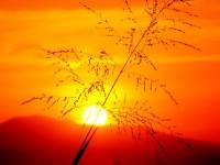Nature_Sundown_Great_sunset_005305_